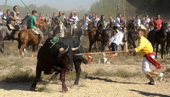Tordesillas encara sus primeros festejos sin el Toro de la Vega