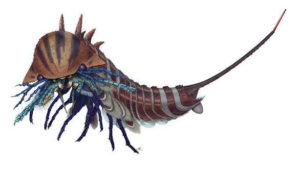 Así era el antepasado más antiguo de arañas, escorpiones y cangrejos