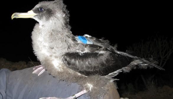 Un estudio revela la incidencia de la contaminación lumínica de las ciudades en el vuelo de las aves