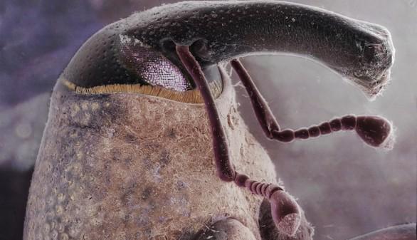 Galería: Las mejores imágenes científicas del año