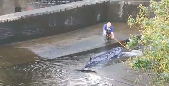 Rescatada una ballena varada en el río Támesis