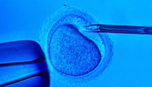 Nace el primer bebé con ADN de tres padres
