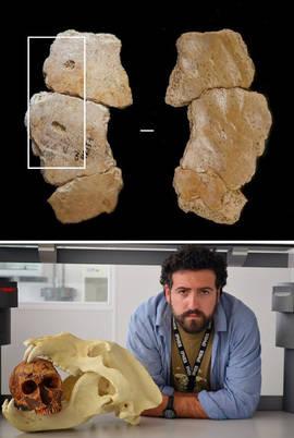 Arriba, restos de neandertal con marcas de la dentadura de un carnívoro. Abajo, Edgar Camarós con una recreación de un ataque a un neandertal. Fotos: IPHES