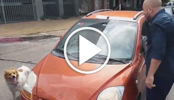 Vídeos virales. Detienen al coche que abandonó un perro en la calle