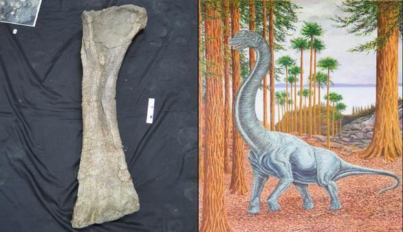 Hallado en Soria un nuevo gran dinosaurio que medía 14 metros