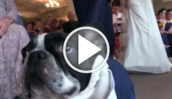 Vídeos virales. El perro que salvó la boda de sus dueños