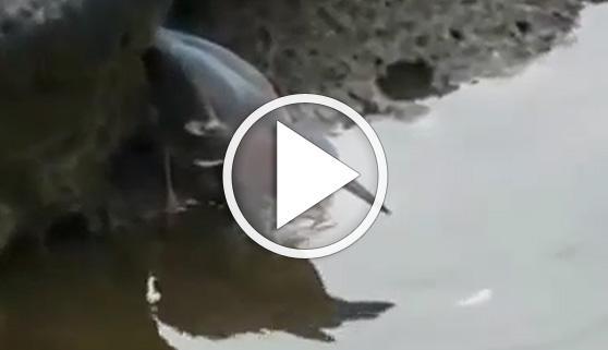 Vídeos virales. El pescador más listo del mundo animal