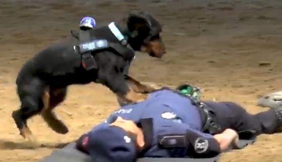 El RCP canino más famoso del momento