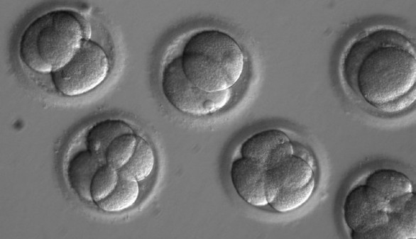 Científicos logran por primera vez reparar una mutación genética en un embrión