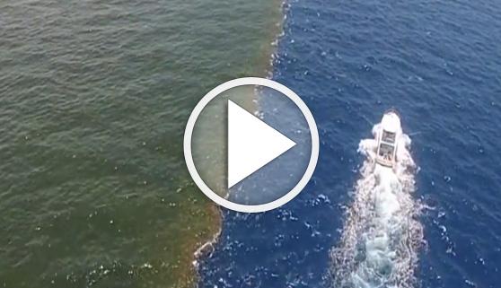Vídeos virales. Entre dos océanos, el Golfo de Alaska