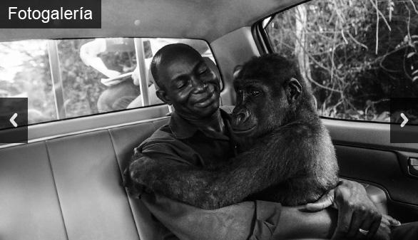 Amor interespecies: ¿qué secreto esconde la fotografía animal del año?