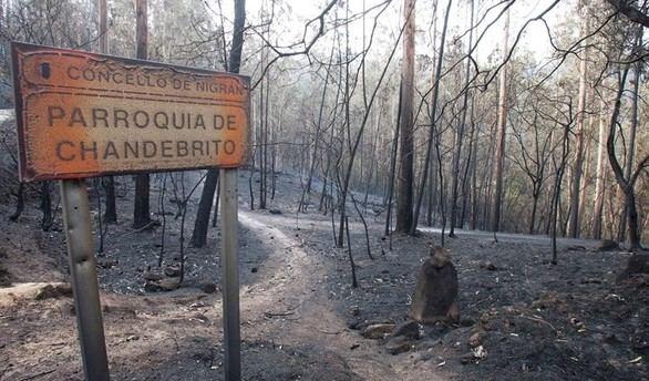 35.000 hectáreas ardieron en Galicia el pasado fin de semana