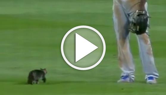Vídeos virales. El gato que cambió la suerte de un partido