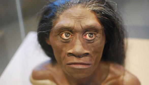 El 'hobbit' no era un Homo sapiens con síndrome de Down