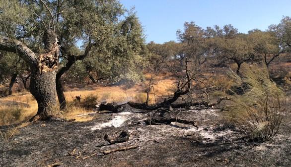 El incendio en El Castillo de las Guardas, estabilizado