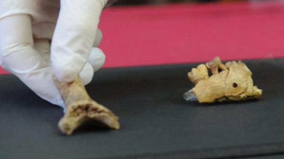 Hallados en Cataluña un húmero y una mandíbula de un niño neandertal
