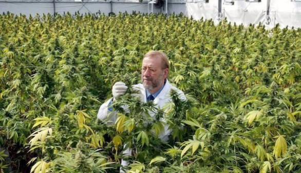 Una región holandesa factura 1.000 millones al año en marihuana