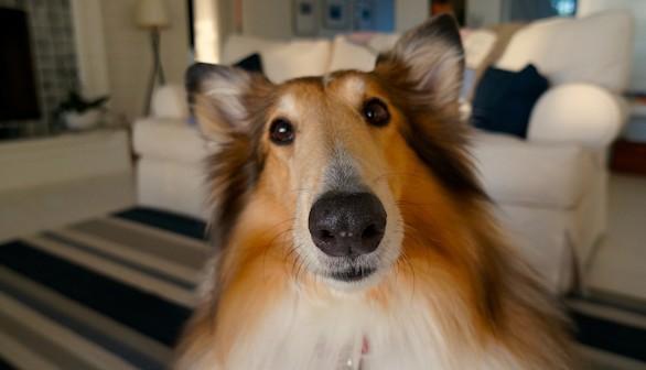 El síndrome postvacacional también afecta a las mascotas