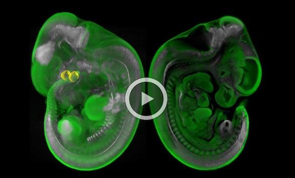 La superresolución e imágenes 3D revolucionan la tecnología microscópica