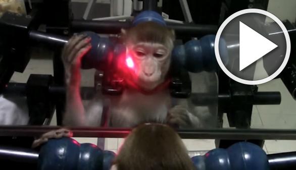 Con entrenamiento, los monos también saben reconocerse en un espejo