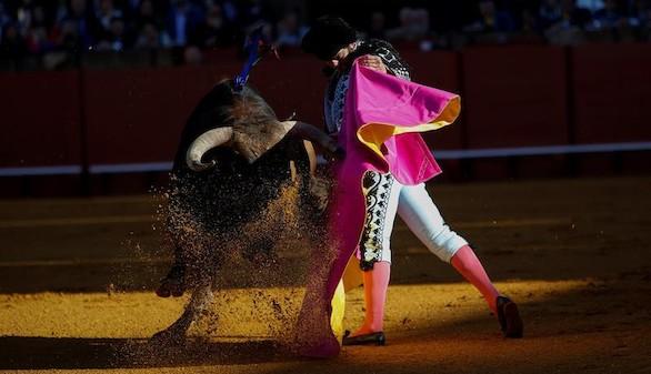 El toro en México. Toros en el Zócalo
