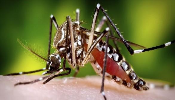 Se extiende el virus del Zika: ¿qué es y cómo se contrae?
