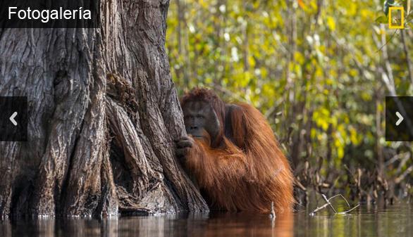 National Geographic elige las mejores fotografías de naturaleza del año