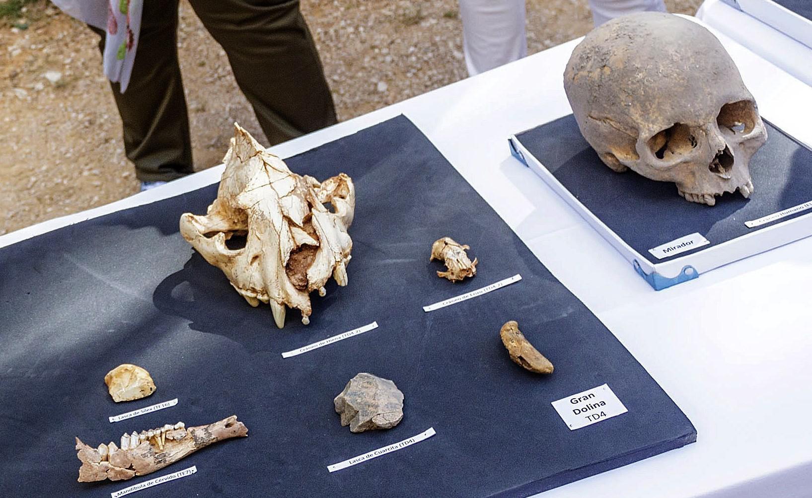 Un neandertal para completar la secuencia de la evolución de Atapuerca
