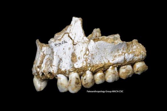 Los neandertales se automedicaban con plantas medicinales