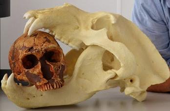 Los neandertales, cazadores cazados por grandes carnívoros