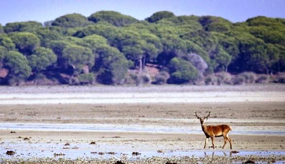 Doñana pide auxilio: sin medidas 'urgentes y contundentes', los daños 'pueden ser irreversibles'
