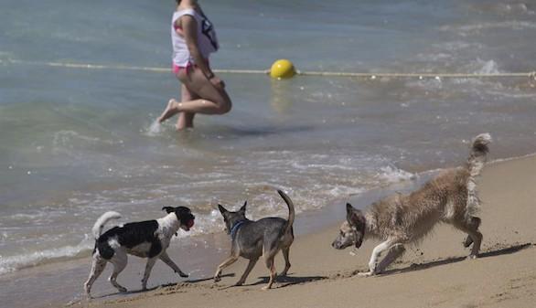 Barcelona estrena su primera playa acondicionada para perros