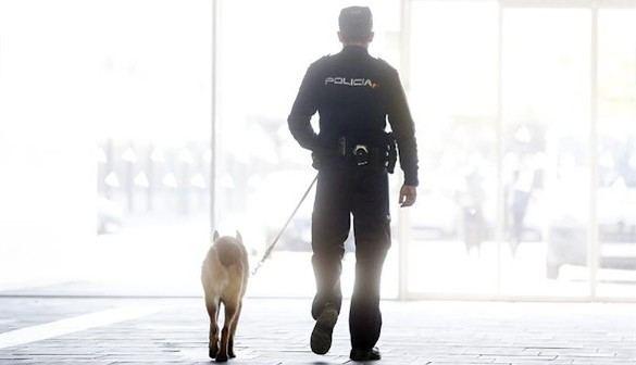 Interior refuerza la vigilancia para prevenir un atentado