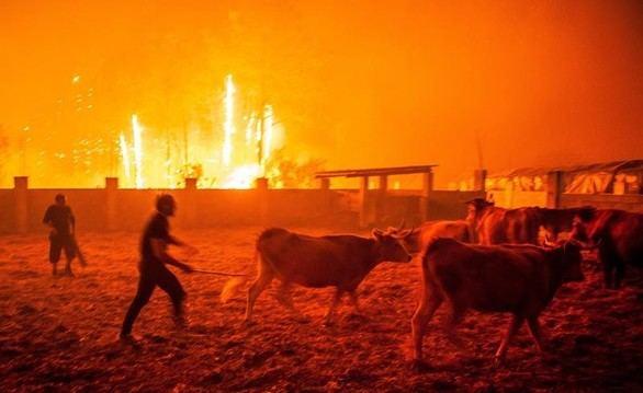 Al menos 36 fallecidos en los incendios de Portugal