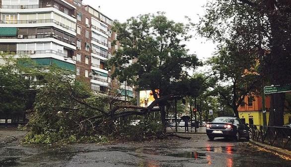 Seis heridos y numerosos árboles caídos por una tormenta sobre Madrid