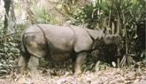 Rinoceronte de Java captado por una cámara para el estudio.