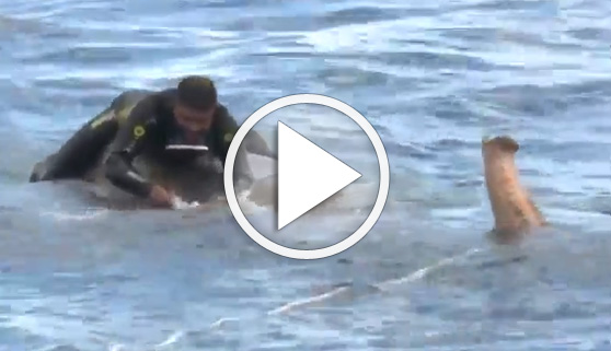 Vídeos virales. Sorprendente rescate de un elefante en alta mar