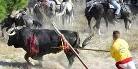 El Toro de la Vega, vestigio de una suerte introducida durante la invasión musulmana