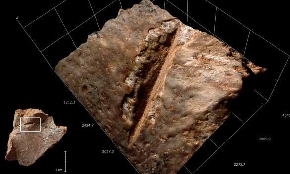 Los seres humanos comíamos tortugas hace 400.000 años
