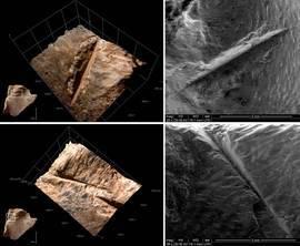 Marcas de corte en un hIpoplastron de tortuga vistas bajo microscopio electrónico de barrido ambiental y su reconstrucción en 3D con un microscopio digital KH-8700 3D / Ruth Blasco - Cenieh