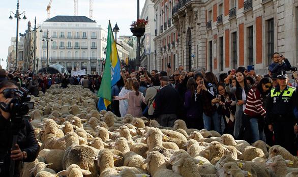 Madrid, convertida en vía pecuaria por la Fiesta de la Trashumancia