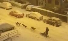 La otra cara de la nevada: guerra de bolas, un trineo tirado por cinco perros, esquís por la ciudad...