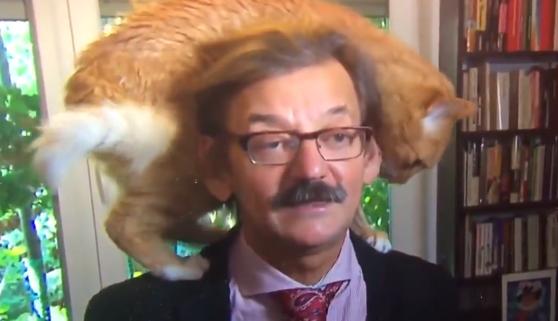 Un gato eclipsa a su dueño en una entrevista en directo