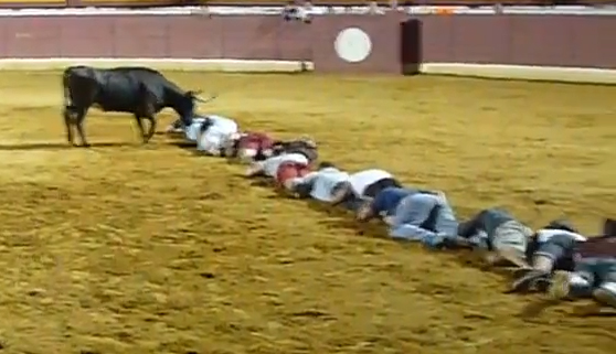 Una competición muy loca: ciempiés humano contra toro