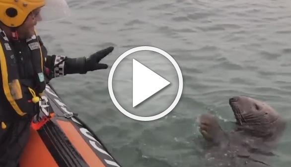 Vídeos virales. Una amistosa foca se acerca a saludar a los guardacostas