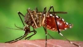 ¿Conocemos las patologías e infecciones 'importadas'?