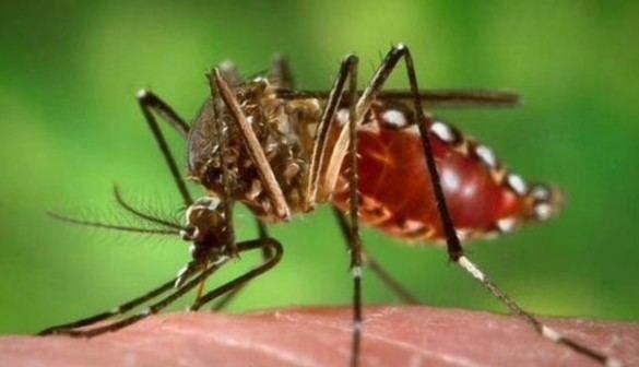 Ya son 64 los casos del Zika diagnosticados en España