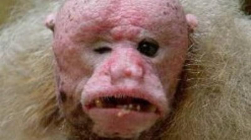 El Baño Mas Feo Del Mundo:Cuál es el animal más feo del mundo?