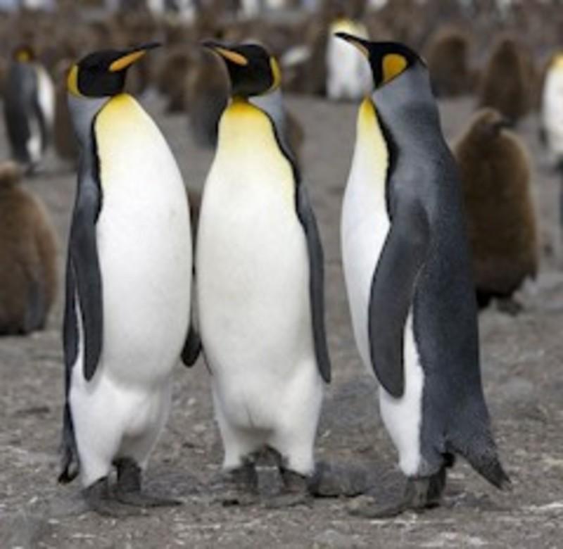 Photos sous marine  Pingui_240