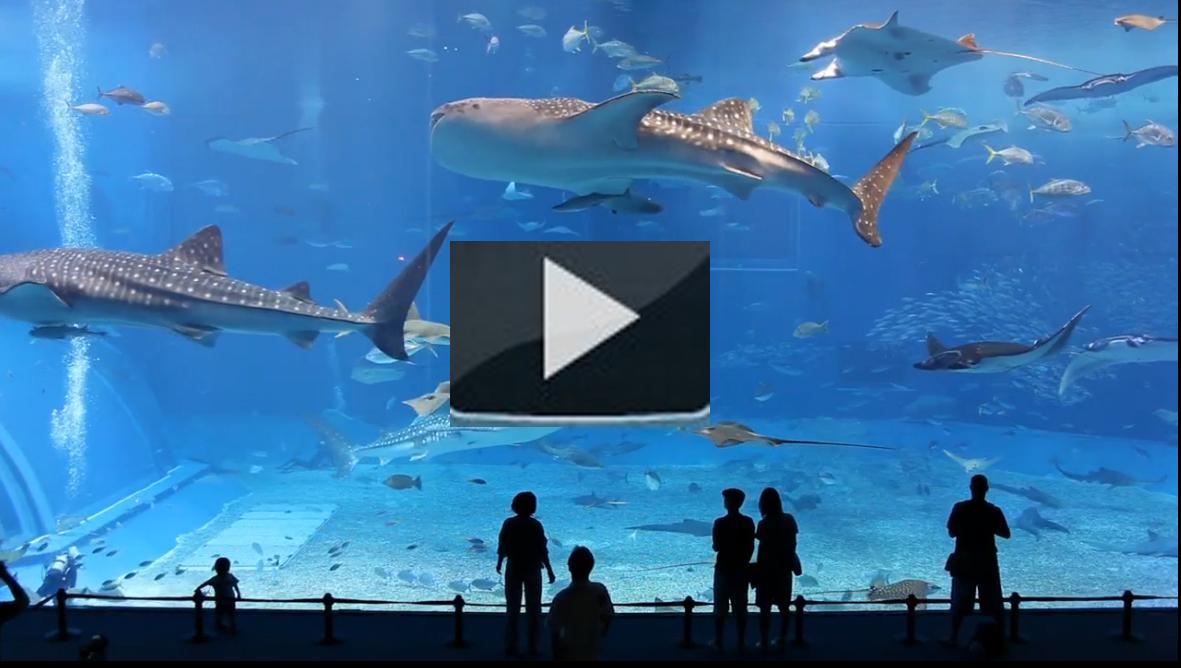 Kuroshio sea el segundo acuario m s grande del mundo el for Mejores peces para acuario